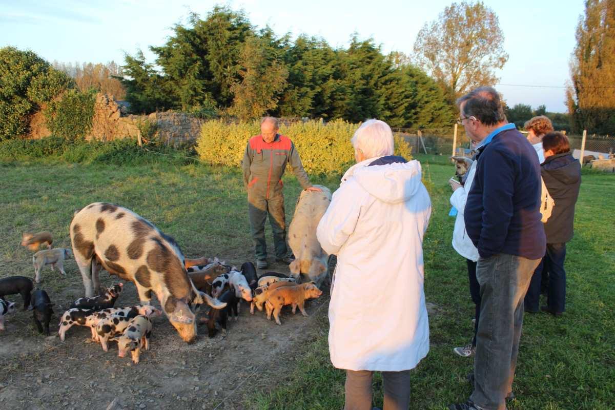 élevage bio de porcs