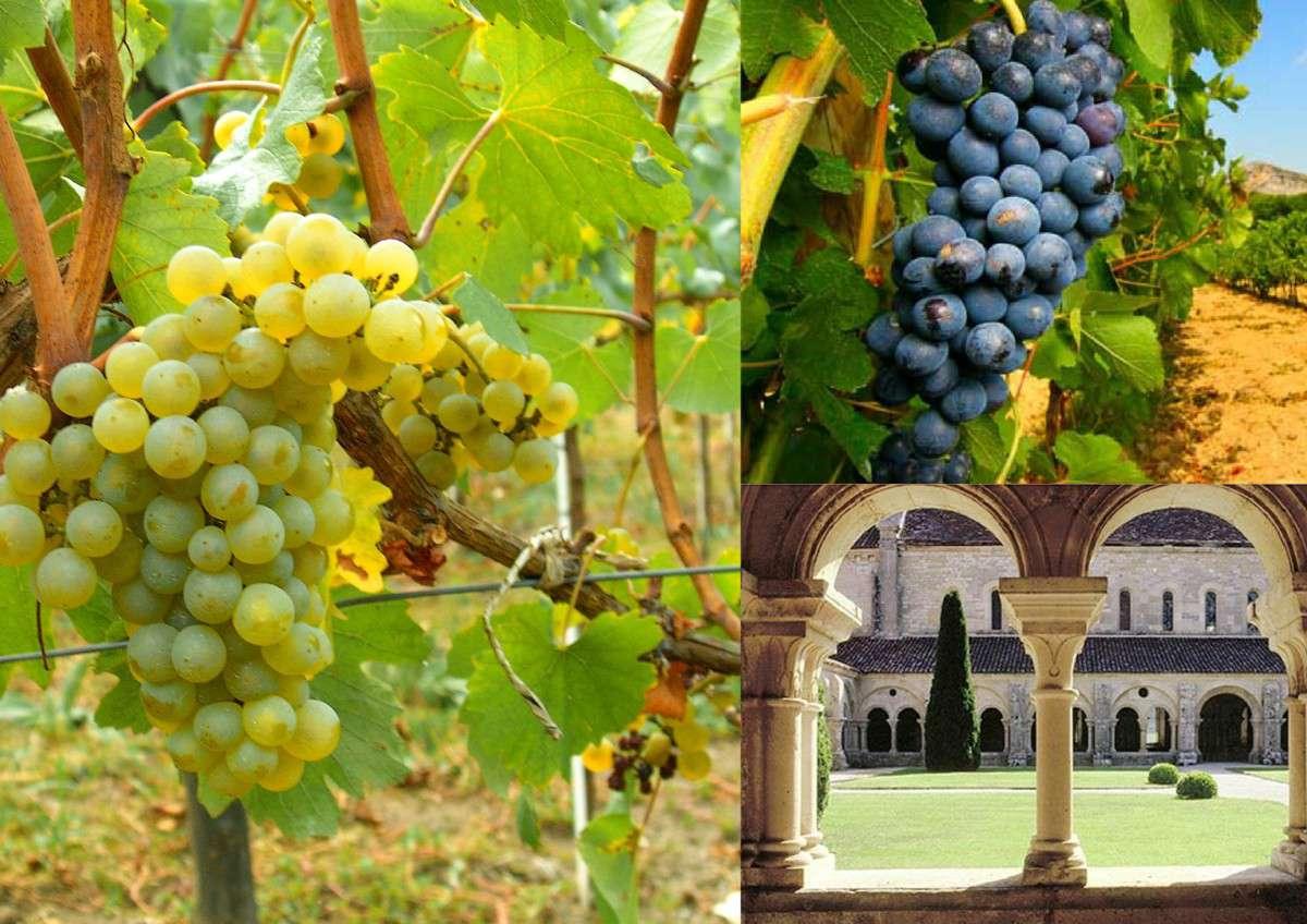vigne de l'abbaye